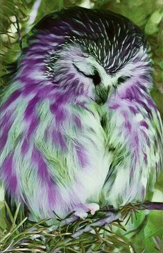 beautiful birds This feathered beauty is purest heaven! Owl Photos, Owl Pictures, Exotic Birds, Colorful Birds, Beautiful Owl, Animals Beautiful, Baby Owls, Cute Baby Animals, Pretty Birds