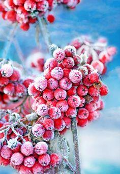 Raureif - Winterdeko im Garten