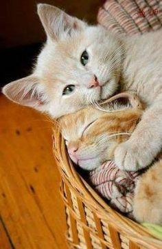 """cuteandadorable: """"So cuddly!!❤❤ """""""