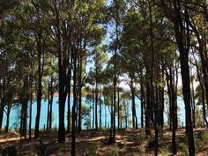 Winter In Australia, Western Australia, Great Places, Places To Go, Strawberry Farm, State Forest, Going On Holiday, Family Holiday, Campsite