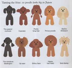 Huxtable The Poodle   Toy Poodle Blog   Parti Poodle: Japanese Style: Poodle Clips & Cuts Grooming #toypoodle