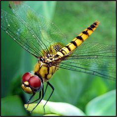Dragonfly II (14,000+ views!) | Flickr - Photo Sharing!