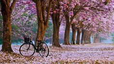 VuNature.com - Bike Landscapes Spring Nature Bicycle Trees Emotions Roses Leaves Romantic Flowers Photos Beautiful