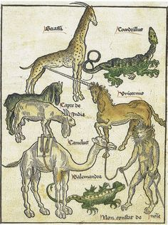 Bernhard von Breidenbach - Peregrinatio in terram sanctam - Medieval bestiary with a unicorn Medieval Drawings, Medieval Art, Renaissance, Unicorn Tapestries, Old Best Friends, Historia Natural, The Last Unicorn, Legends And Myths, Year Of The Dragon