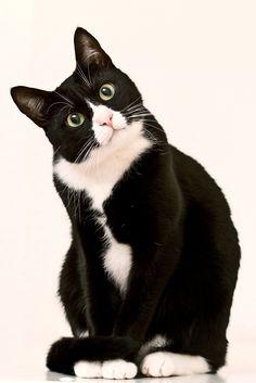 This cat looks just like mine!!