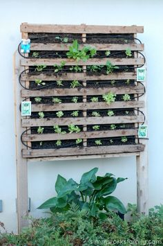 build a vertical garden using pallets - plant from seed Palette Garden, Vertical Garden Diy, Vertical Gardens, Container Gardening, Pallet Gardening, Herb Container, Urban Gardening, Bird Houses Diy, Old Pallets