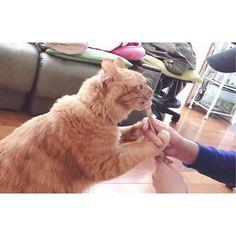 #猫  #고양이 #귀여워 #좋아요 #일본 #japan #ㅎㅎㅎ#묘스타그램 #냥스타그램 #냥 #catstagram #愛猫 #cat #오사카 #냥스타 #데일리 #지금