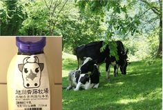0323 素晴らしい牛乳と出会いました   素晴らしい牛乳と出会いました。 北海道・旭川の牧場です。 本物の味でした。 土が健康です。草も健康です。そして牛も健康です。だからおいしい牛乳なのです。 ✳️山地自然放牧牛乳です 旭川斉藤牧場の牛乳は、日本には数件しかない本物の山地自然放牧牛乳です。 ✳️輸入・配合飼料は使用していません。 ✳️牛乳をそのままに近い状態でおいしくいただくためのこだわり 斉藤牧場の牛乳は、『ノンホモジナイズ低温殺菌牛乳」』です。 ✳️低温殺菌牛乳です。・・・・・これが、重要です。