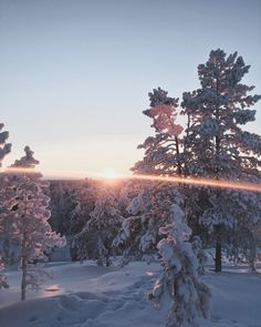 Arctic luxury or Frozen in Rovaniemi ? Winter running in Ounasvaara winter trails in Rovaniemi, Finnish Lapland. Cold, but beautiful. Polar Night, Lapland Finland, Winter Running, North Country, Winter Light, Arctic, Trail, Mountains, Luxury
