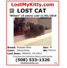 Lost Cat Named Wilson: Medway, MA Russian Blue, Cat Names, M Color, Lost & Found, Pets, Animals, Animales, Animaux, Animal