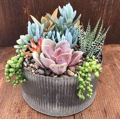 Succulent Arrangement Corrugated Metal #succulents #succulentarrangement #corrugatedmetal #plants #ad #metalcontainter