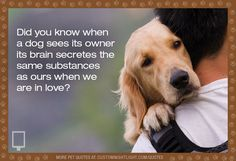 Love Dogs #Inspirational #Quotes  Please check out Edens Corner  For pet tips and stories from pet lovers, visit  http://www.edenscorner.com/#!happy-pets/c24do