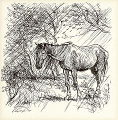 The Fox and the Horse - The Fairy Tales of the Brothers Grimm, 1909 Grow Taller Exercises, Horse Sketch, Brothers Grimm, Arthur Rackham, Vintage Horse, How To Grow Taller, Horses, Horse Horse, Fairy Tales