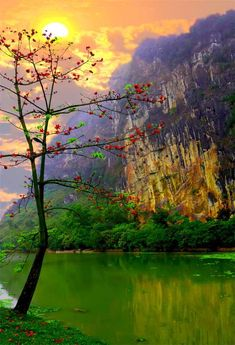 """wowtastic-nature: """"  Hoa gao on 500px by Ha Son, Nam Dinh, Viet Nam ☀ 614✱900px-rating:64.9 """""""