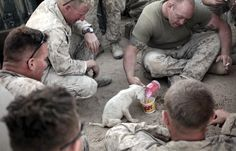 nothin' hotter than manly men taking care of an animal.  bravo soldiers.