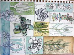 Jane La Fazio 10 objects 10 ways ~ succulents