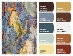 Elm Tree Bark Palette Chip It! by Sherwin-Williams – Home