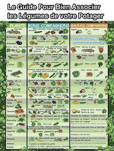 Guide complet pour bien associer les légumes potager                                                                                                                                                                                 Plus
