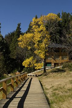 Ilha Vitoria em Bariloche por Melissa Toledo. #Bariloche #Travel #Argentina #LitoralVerde