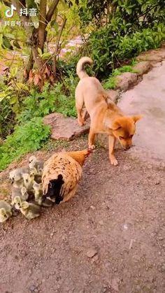 Cute Little Animals, Cute Funny Animals, Funny Dogs, Cute Dogs, Cute Animal Videos, Funny Animal Pictures, Animal Jokes, Animals Beautiful, Pet Birds