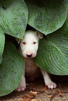 ¡Me estoy escondiendo! pero siendo blanco no sé no sé.... :-)