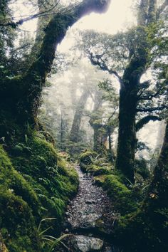 expressions-of-nature:  by Ellen Flipse  Routeburn Track New Zealand
