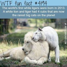 Rarest cats on the planet