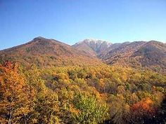 Fall foliage, festivals, elk viewing, hayrides, train rides.  It's all here >> http://www.mysmokymountainvacation.com/things-to-do-in-the-fall-in-the-smoky-mountains.html … #smokymountains