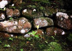 苔のむすまで #大徳寺 #高桐院 #石組み #daitokuji #kotoin  #moss #stone #zen #temple #KYOTOGRAPHIE #KG+ #京都国際写真祭 #kyoto