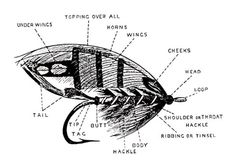 Anatomy of a Salmon Fly