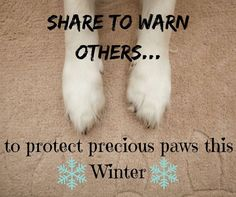 "Take care of those precious paws this Winter! The Rspca warns:  ""ROCK SALT POISONING IN PETS: Rock salt is a mixture of salt (sodium chloride) and grit and is used to help de-ice roads in winter. Rock salt can be a danger to pets such as dogs and cats if they lick it from their paws or fur."" Gently rinse and dry your pet's paws to avoid irritation and ill effects #lovedogs #Winter"