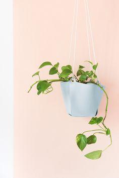 diy suspension cuir plante www.atelierdecuriosite.com