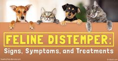 Feline panleukopenia virus, often shortened to FPL or FPV, is highly contagious, and prevention involves either well-timed vaccination or homeopathic nosodes. http://healthypets.mercola.com/sites/healthypets/archive/2016/11/06/feline-panleukopenia-virus.aspx