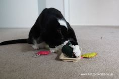 Oliver & Nubai: Arrival of the FreakMeow catnip toys PART 2 Hi everyone, It's Oliver here today with an update from Katzenworld HQ. 😀 You may remember that we told you about our surprise box from FreakMEOWt. Well today we are back with another look at their awesome catnip toys. Oliver: This looks a bit like that fishy stuff the humans sometimes bring home after work. […] #Cat, #Cats, #Cute, #Funny, #Katze, #Katzen, #Kawaii, #ねこ, #猫 #Nubia, #Ol