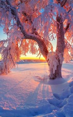 Sunset in winter - Sunset in winter - Winter Photography, Landscape Photography, Nature Photography, Winter Sunset, Winter Scenery, Nature Pictures, Beautiful Pictures, Winter Wallpaper, Winter Magic