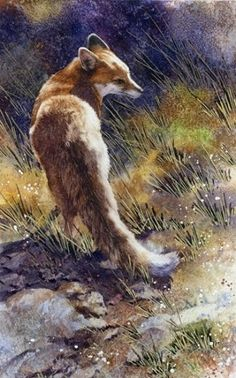 I love this painting. Always Wary--Red Fox by Joe Garcia Watercolor ~ 15 x 7 Wildlife Paintings, Wildlife Art, Animal Paintings, Animal Drawings, Watercolor Animals, Watercolor Paintings, Watercolors, Watercolor Journal, Fox Drawing