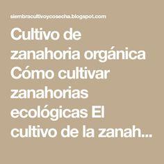 Cultivo de zanahoria orgánica Cómo cultivar zanahorias ecológicas El cultivo de la zanahoria, es muy interesante de realizar en nuestr...