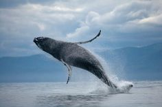 News Flash: Serving Whale in the U.S. Could Mean Jail Time