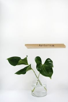 April and May: green must have in june: anthurium