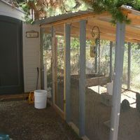 Here it is with the run finally built and attached to the coop! The left side door is permanently closed for use as a 'wall' of sorts.