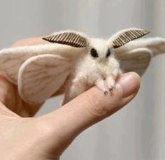 Venezuelan Poodle Moth - this looks like it came straight out of an animated movie into real life