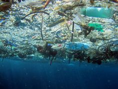 There Are At Least 5.25 Trillion Pieces of Plastic in the Ocean