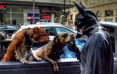Batman choosing the new Bathound.
