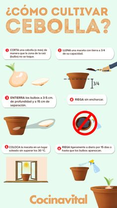 - Cómo cultivar cebollas sin semillas en macetas Take advantage of the waste of onions of the meal of the day and get to grow onions without buying seeds, easy, in pots and from home! Eco Garden, Home Vegetable Garden, Fruit Garden, Edible Garden, Garden Plants, Growing Plants, Growing Vegetables, Organic Gardening, Gardening Tips