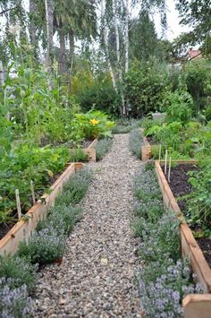 raised veg beds with herb borders