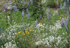 brea, california near orange county, ca. wildflowers, retail, and public art