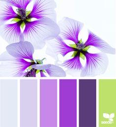 { flora brights } image via: @traceylbolton