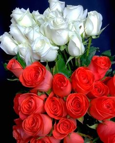 Beautiful Rose Flowers, Romantic Flowers, Most Beautiful Black Women, Good Morning Images Flowers, Corporate Flowers, Growing Plants, Rose Buds, Flower Art, Red And White