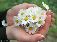 Girls With Flowers, Little Flowers, My Flower, White Flowers, Hand Photography, Balcony Plants, Happy Birthday Greeting Card, Beautiful Flowers Wallpapers, Autumn Scenery
