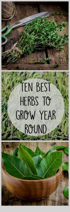 Herbal Gardening 10 Best Herbs to Grow All Year Round - Crafty Little Gnome - 10 best herbs to grow in indoor pots in your kitchen garden.These easy-to-grow herbs offer big health benefits yet still fit on your windowsill. Indoor Vegetable Gardening, Container Gardening, Organic Gardening, Gardening Tips, Gardening Quotes, Urban Gardening, Best Herbs To Grow, Growing Herbs, Growing Mint